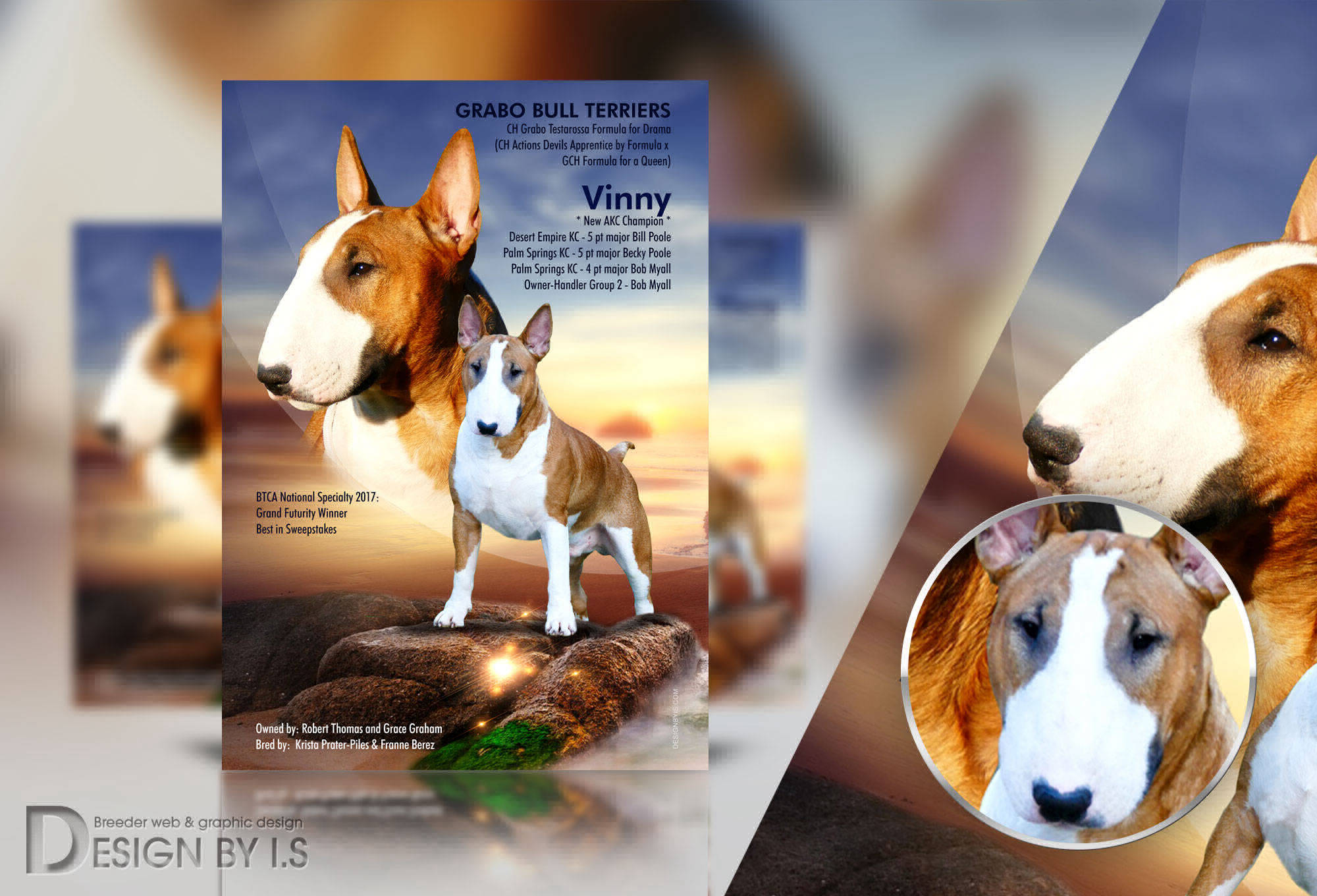 Bull terrier advert. Designbyis