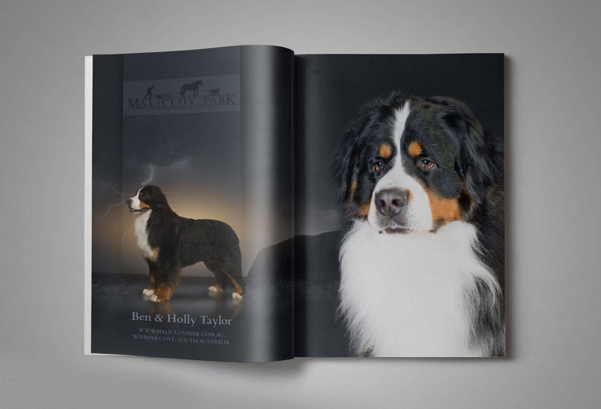 Dog Magazine ad